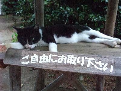 ご自由に猫2