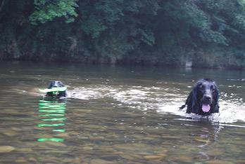 ルークとレイア初泳ぎ