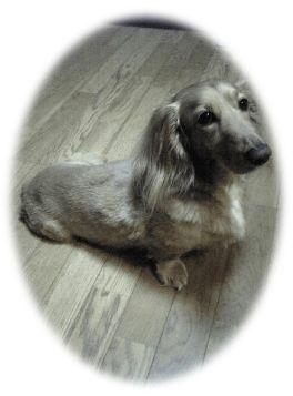 バリカン犬