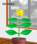 くる花 2011.7.25