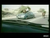 走行中馬に突っ込まれフロントガラスが大破する車