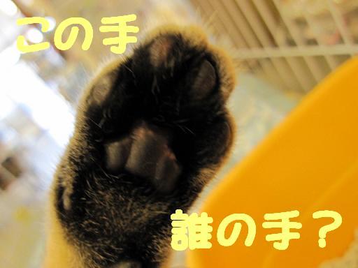 ブログ 猫の手