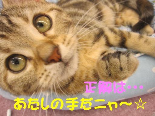 ブログ  正解 猫