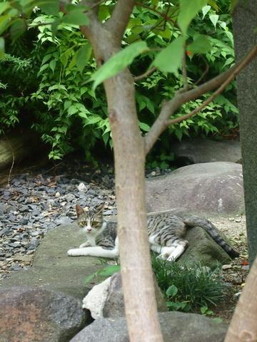 木のキジトラ
