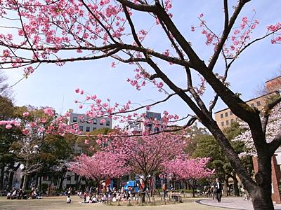 横浜公園にて