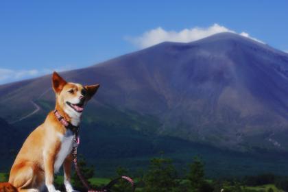 浅間山とみみ