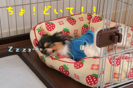 ああIMG_8903_convert_20110508154333