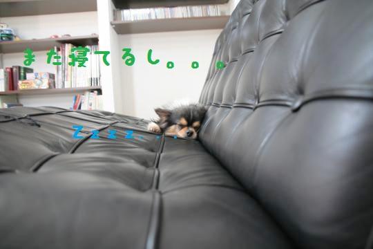 IMG_8930_convert_20110508154555.jpg