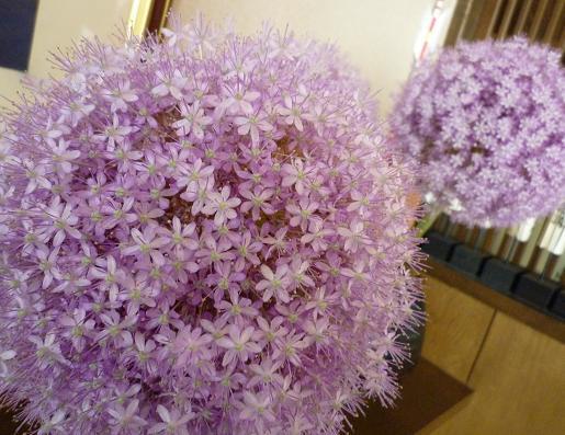 『つづみそば』 花