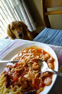 シーフードスパと犬