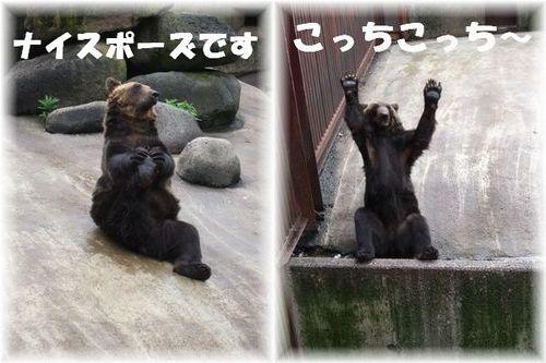 blog熊牧場1