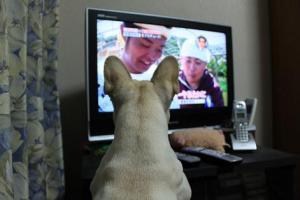 テレビwer