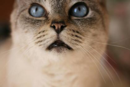 変換 ~ 猫2