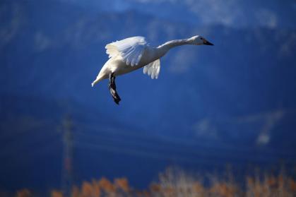変換 ~ 白鳥3