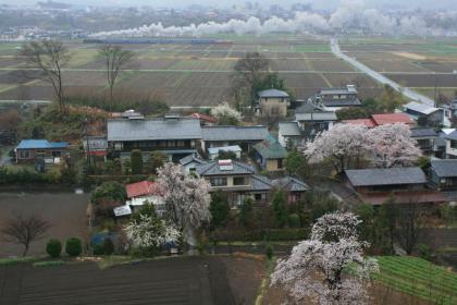 変換 ~ 桜2