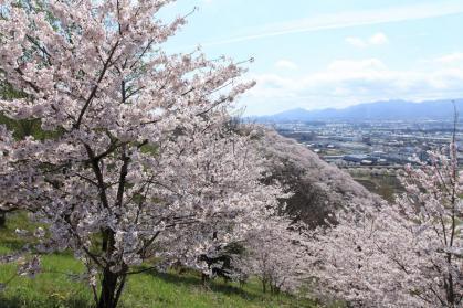 変換 ~ 桜8