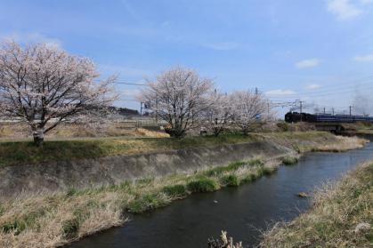 変換 ~ 桜5