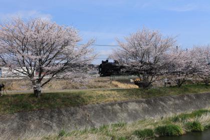変換 ~ 桜6