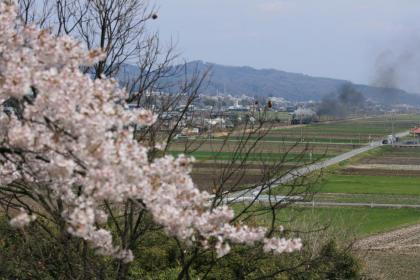 変換 ~ 桜3