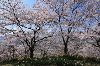 変換 ~ 桜9