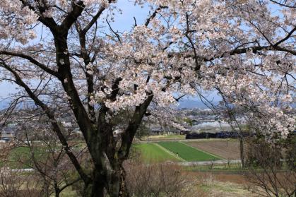 変換 ~ 桜7