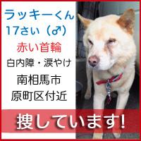 lucky_kun1.jpg