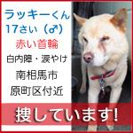 lucky_kun2.jpg