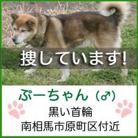phoo_chan1.jpg