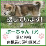 phoo_chan2.jpg