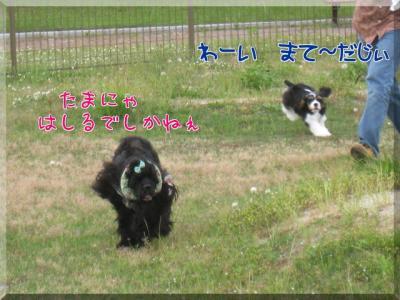 B_g06.jpg