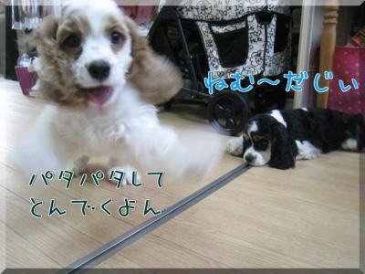 YG_Ed.jpg