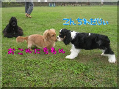uO_hk.jpg