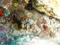 guam monhanasyako 200908