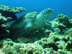 kerama turtle 200804