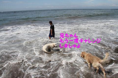 20110806_03.jpg
