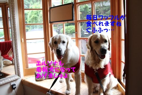 20110807_08_R.jpg