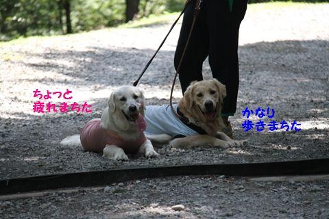 20110815-8_R.jpg
