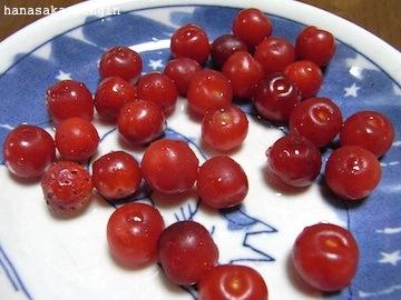 110608赤い実
