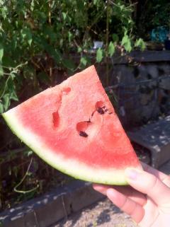 watermelpn2