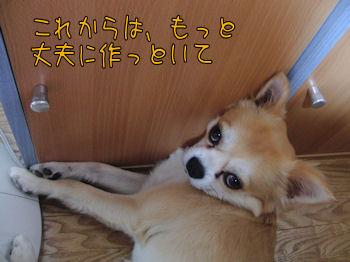 komu0725005