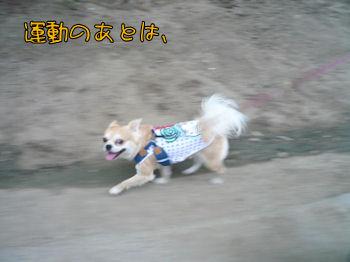 komu0813003