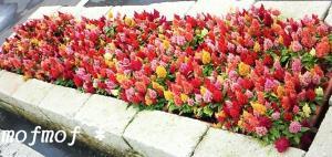 かわいい花壇_mof