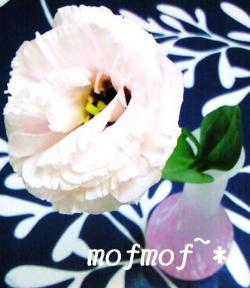 クラリス1_mof