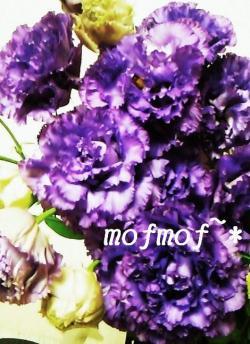 PPコサージュ_mof