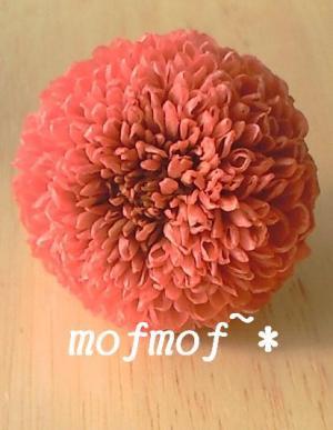 ぴんぽんマムP_mof