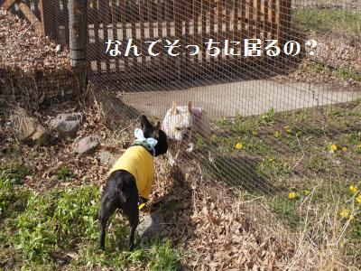 22_20110506225335.jpg