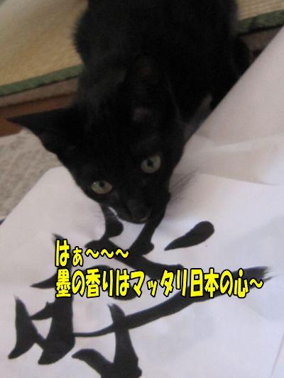 syuji1