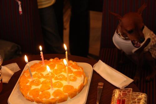 チャコ ケーキ