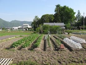 裏の畑 001