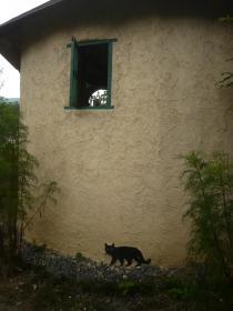 ネコさんが・・・